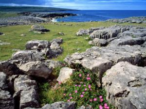 Irish Burren